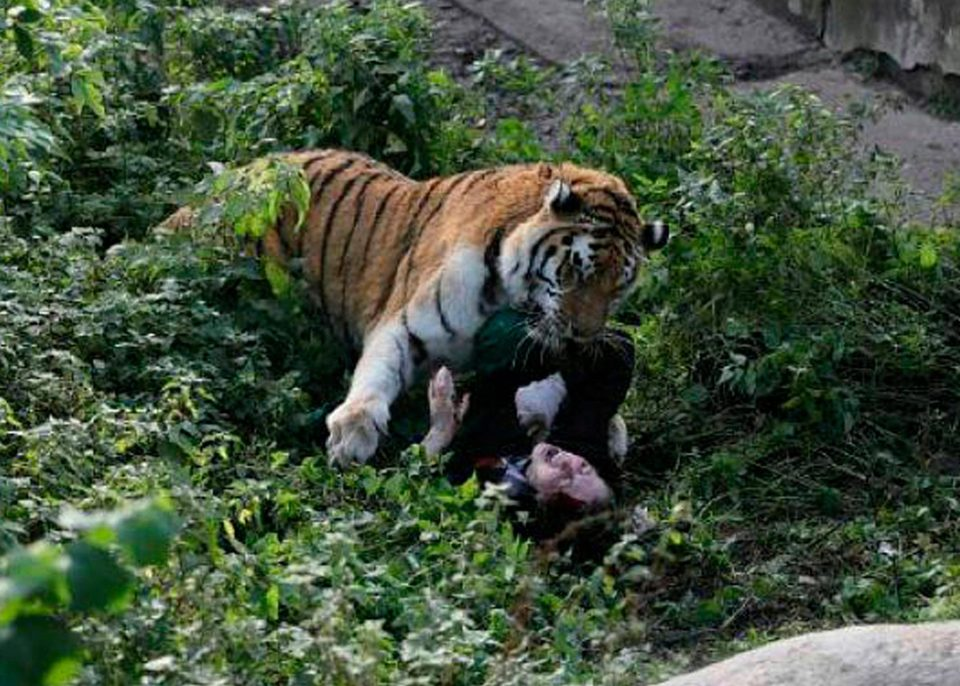 Shocking Moment Zookeeper Is Mauled By Tiger - UNILAD