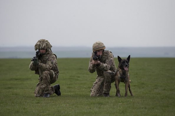 Hero Army Dogs To Be Put Down Because They Cant Find New Home 24257599 10155960099229031 1667270213 n