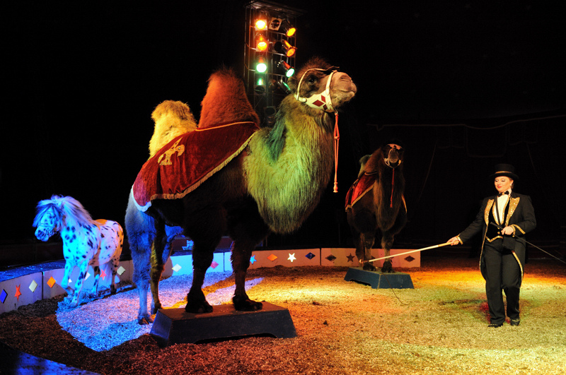 Scotland Bans Use Of Wild Animals In Traveling Circuses 7000062971 0f7ba9aa46 b
