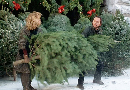 Disgusting Reason You Shouldn't Steal Christmas Trees