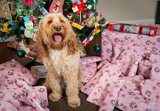 Woman Spends Over £1,000 On Christmas Presents For Her Dog lola web