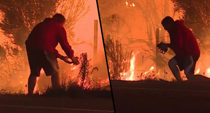 Man Pulls Over To Save Rabbit In California Wild Fires rabbit fire fb