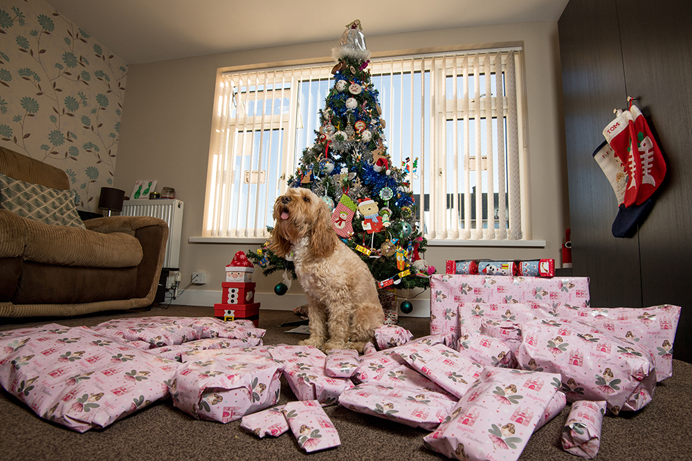 Woman Spends Over £1,000 On Christmas Presents For Her Dog resixe presents barking mad bri 79029