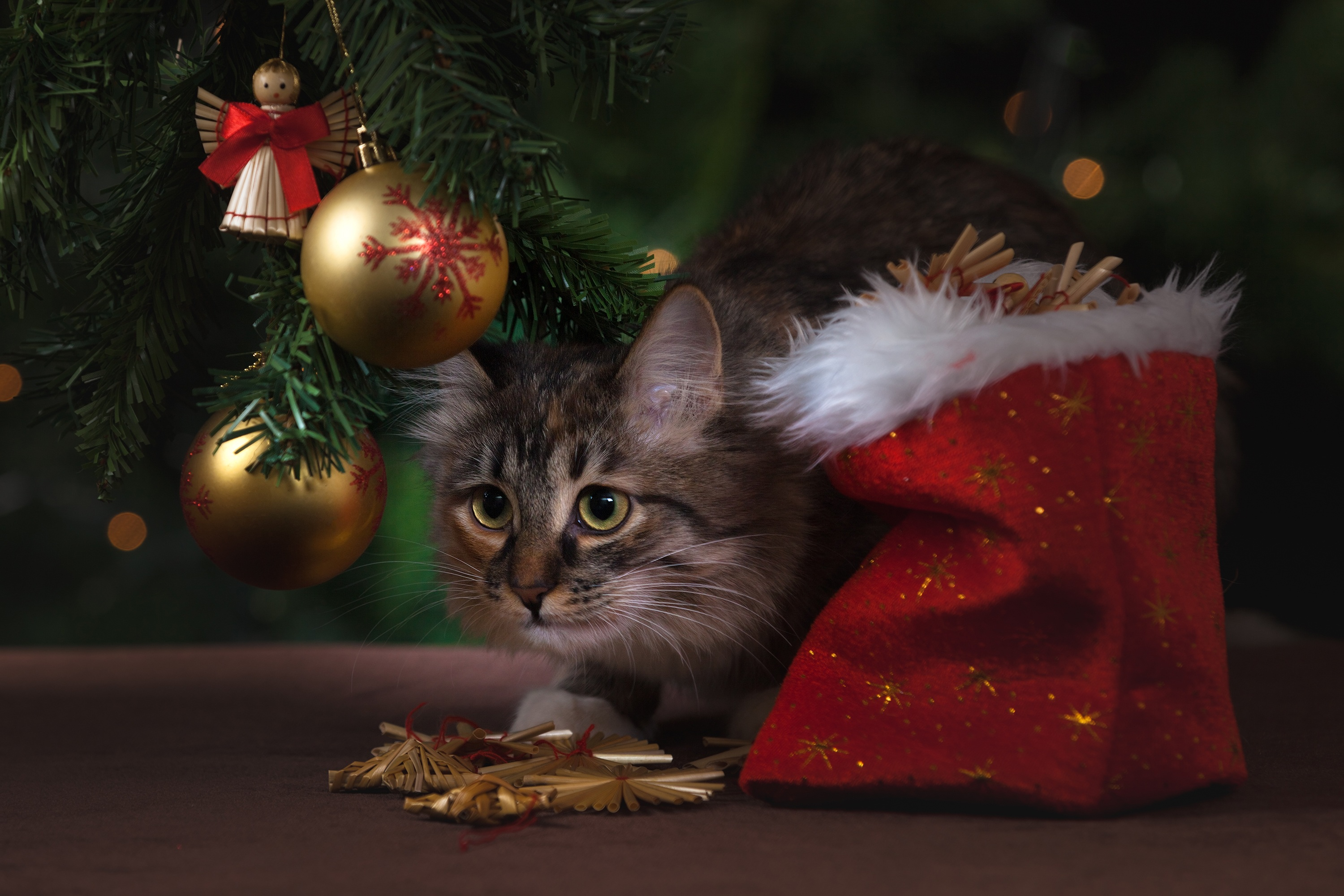 How You Can Stop Feeling So Sad After Christmas Is Over sad christmas cat