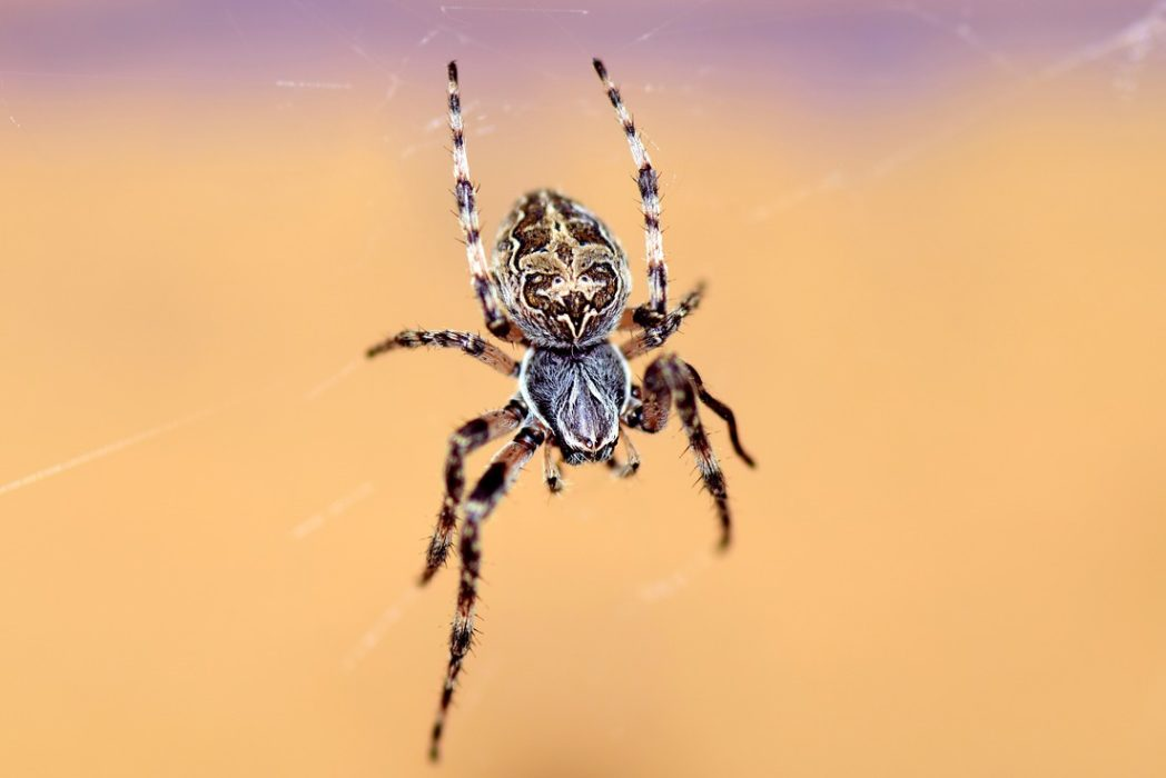 Spiders Could Eat The Entire Human Race In Just One Year If They Wanted spider 2333199 1280 1048x700