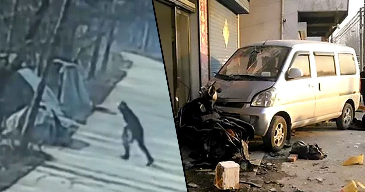 Pet Owner Murders Dog Killer By Ramming Him With His Car 90a