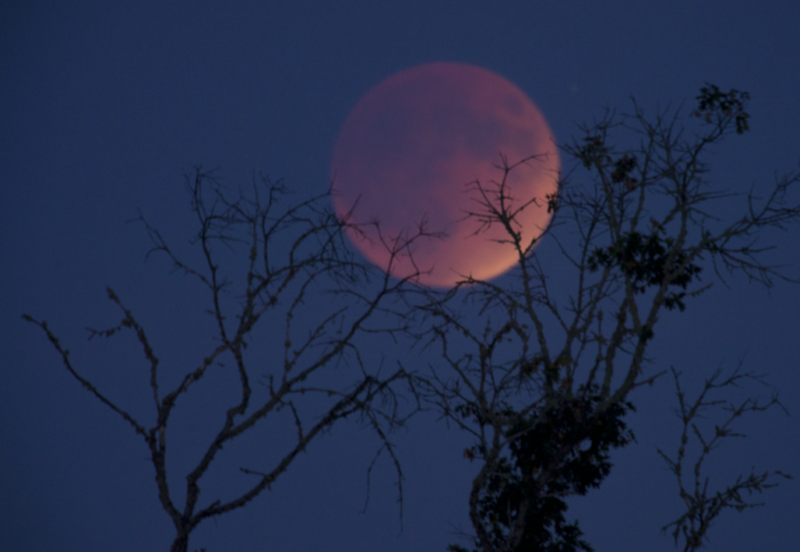 The Super Blue Blood Moon Is Making People Feel Extra Moody Blood Moon