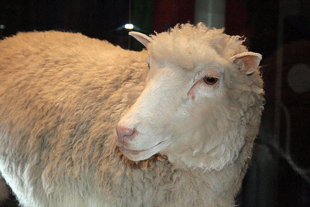 Dolly the sheep was the first example of cloning which could be used to bring dinosaurs back to life after extinction