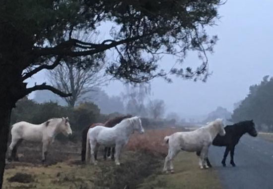Grieving Ponies Stand Guard Over Mare Killed By Motorist PonyKilled WT 1