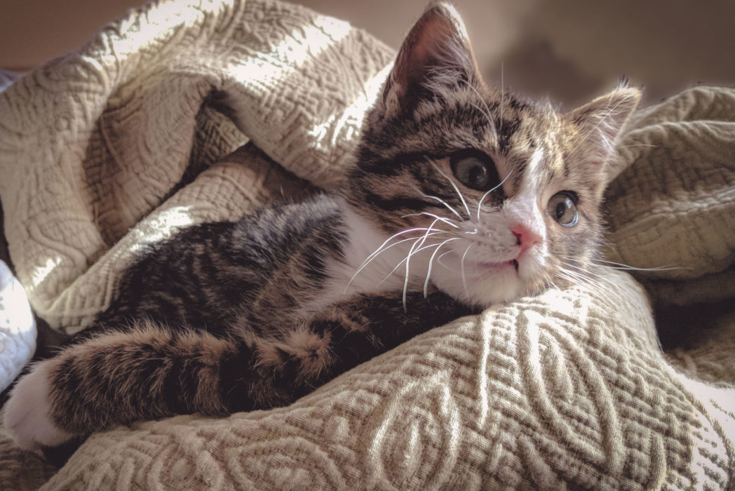 Vet Is Looking For A Professional Cat Cuddler %name