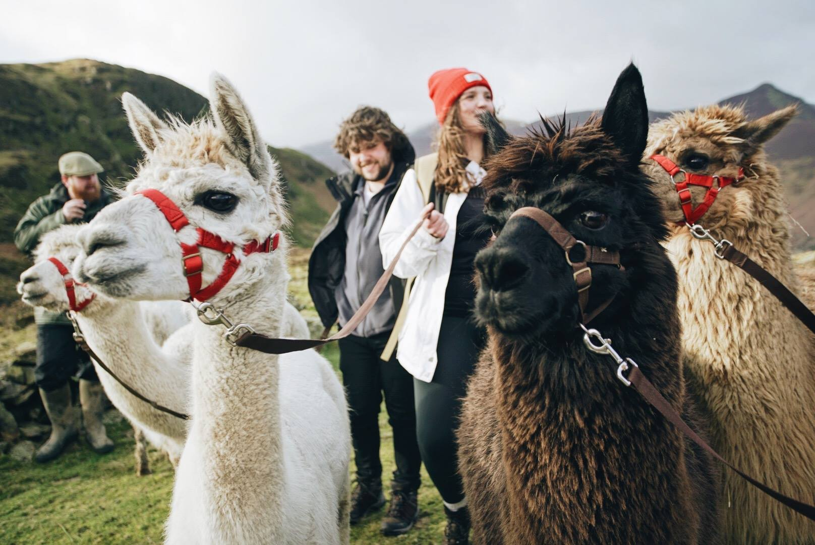 Rescue Alpacas Start Animal Therapy For At Risk Kids 27173106 1130511317052588 1767939530154470333 o 1