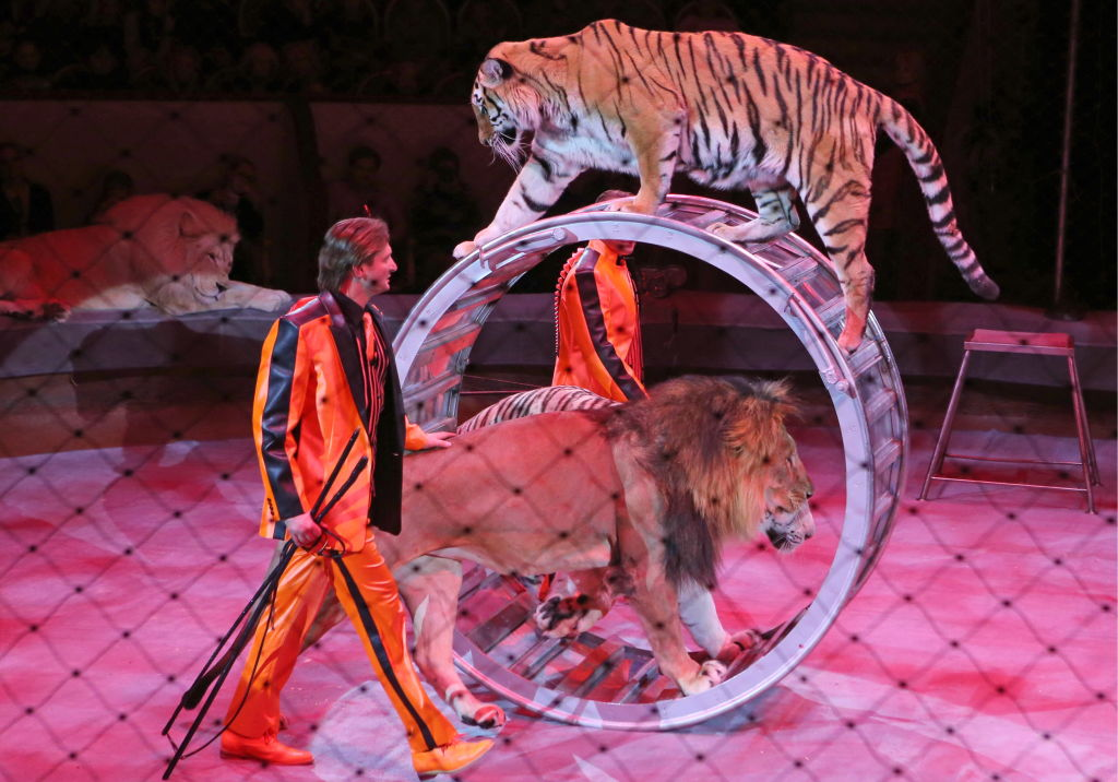 Wild Animals To Be Banned From Circuses By 2020 GettyImages 852144032