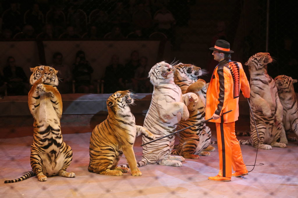Wild Animals To Be Banned From Circuses By 2020 GettyImages 854081236
