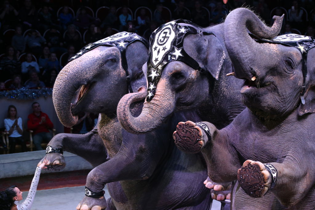 Wild Animals To Be Banned From Circuses By 2020 GettyImages 897290900
