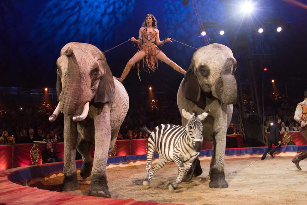 Wild Animals To Be Banned From Circuses By 2020 GettyImages 906745896