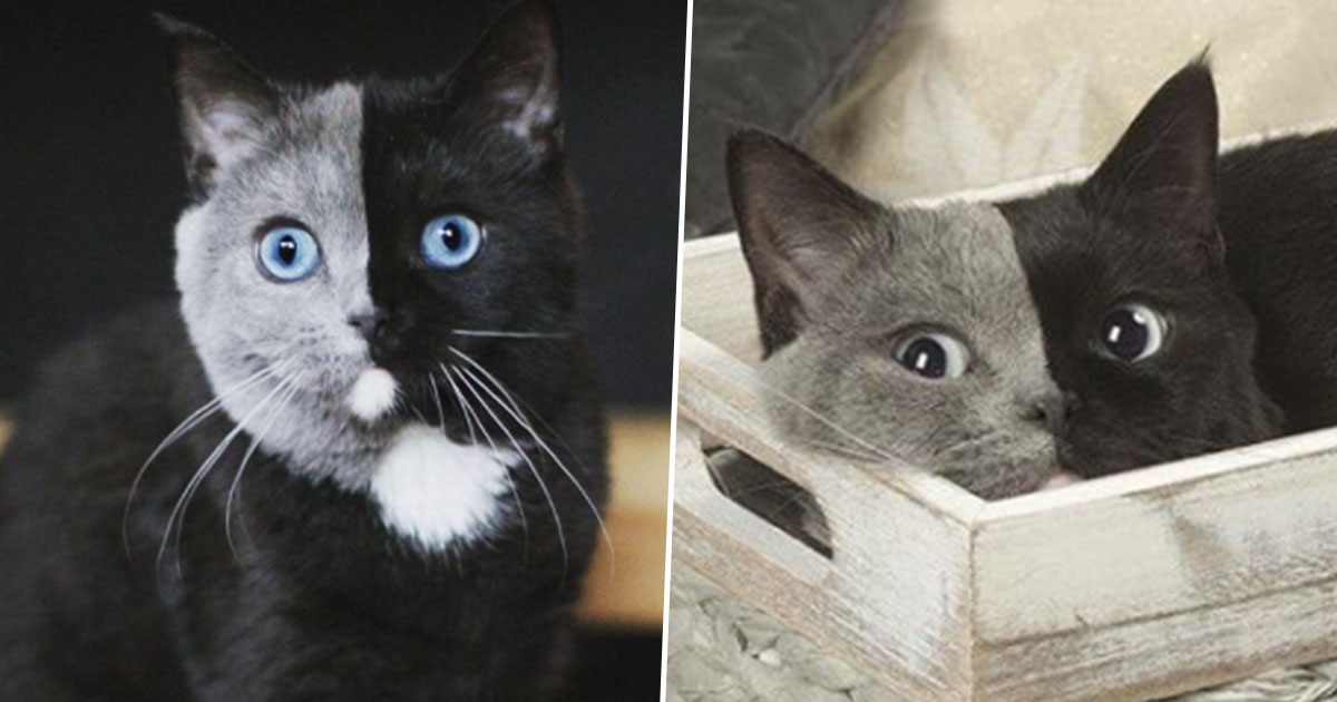 'Most Beautiful Cat In The World' Becomes Online Sensation