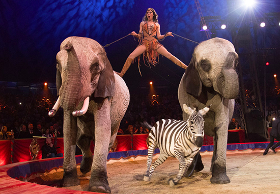 Animals in circus