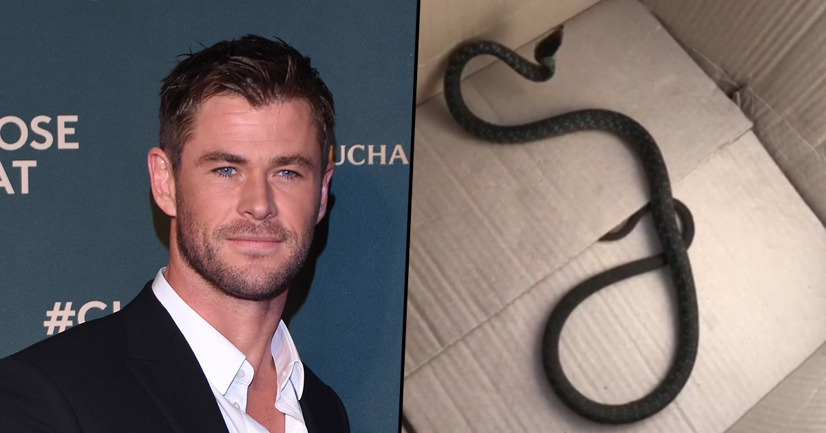 Chris Hemsworth's Wife Wrestles Giant Snake From Family Home