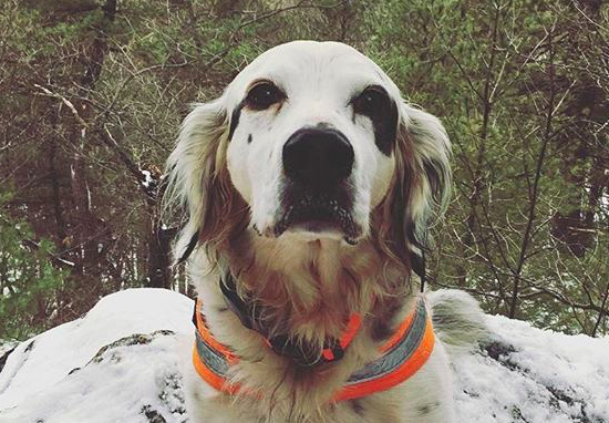 Brave Dog Called Pete Dies Saving Family From Black Bear pete web