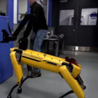 Robot Dog Fights Off Human Who Tries To Interfere With Tasks