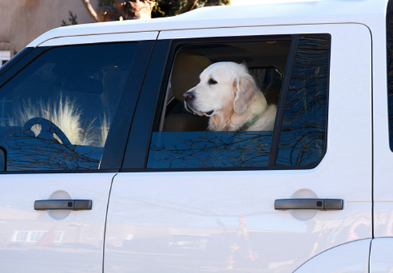 £2,500 Fine For Driving With Unrestrained Pets