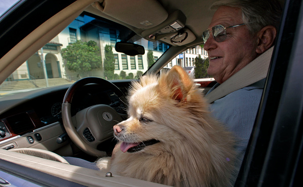 Brits To Be Hit With £2,500 Fine For Driving With Pets GettyImages 563980993