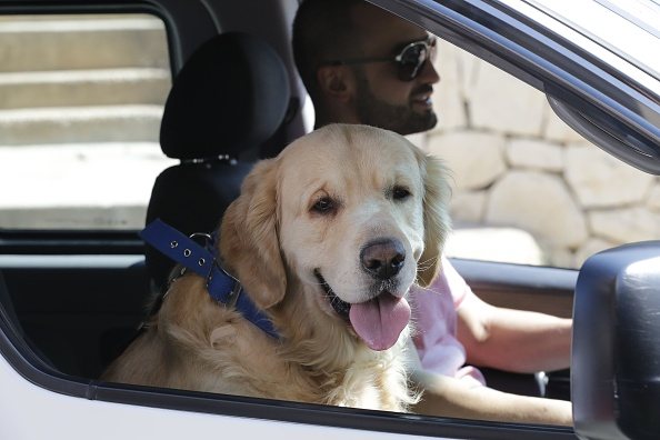 Brits To Be Hit With £2,500 Fine For Driving With Pets GettyImages 834634892