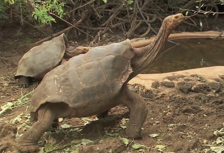 Diego The Tortoise Had So Much Sex He Saved His Entire Species Tortoise web