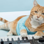 YouTube Star Bento The Keyboard Cat Has Sadly Died Aged 9