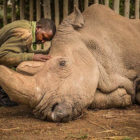 Photo Shows Last Male Northern White Rhino Being Comforted By Ranger Before He Died