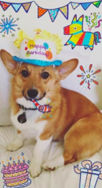 Couple Throws Full Birthday Party For Their Dog