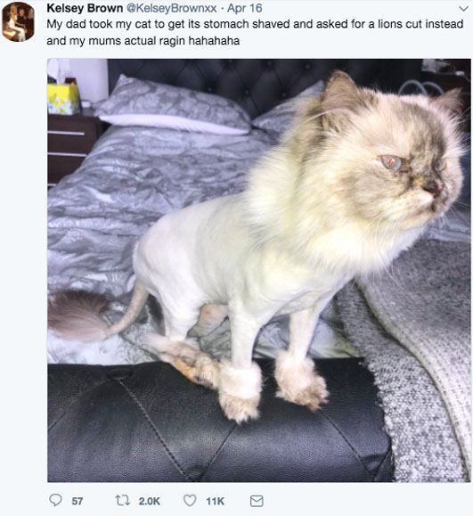 Dad Shaves Cat To Look Like Lion To Reenact Incredible Simba Moment UNILAD