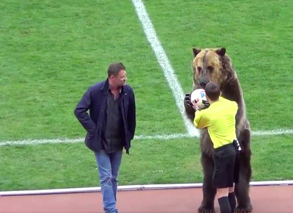 Bears Could Deliver Match Ball At World Cup Russia