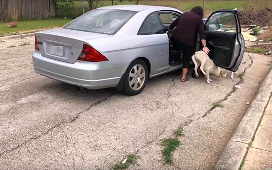 Woman Confronted While Abandoning Four Dogs In Parking Lot