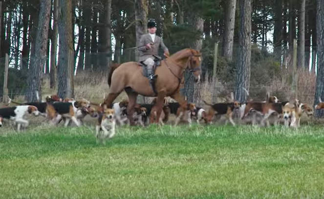 fox hunting sabs group hunters horses hounds unilad