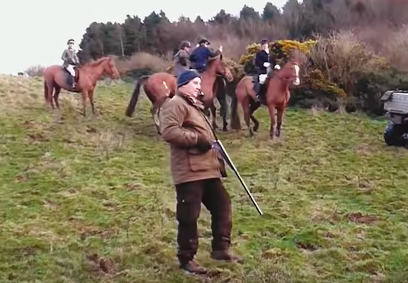 fox hunting unilad animals hounds