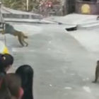 Man Gets Instant Karma After Pushing Monkey Into Pond