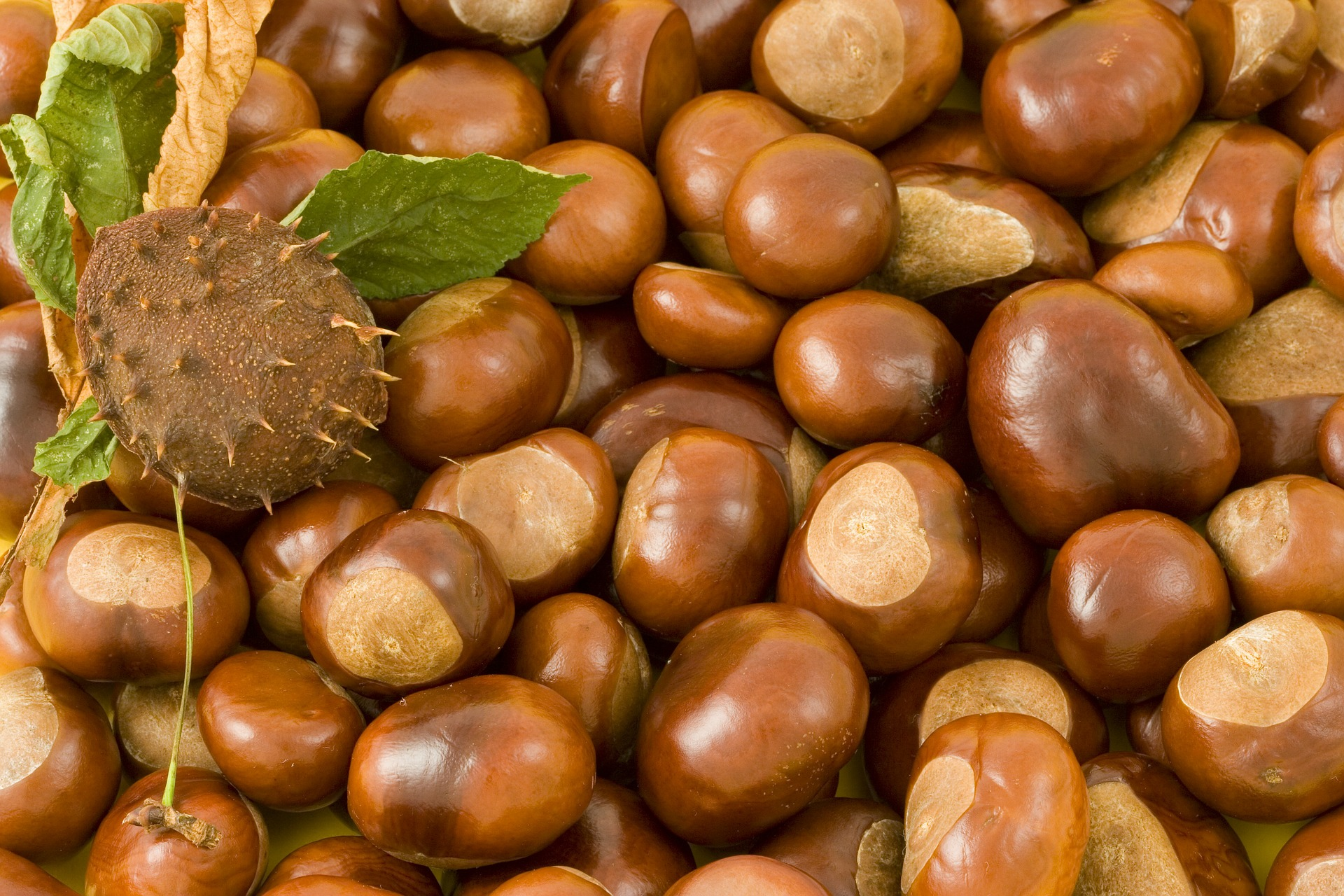 Conkers - a popular and controversial playground activity - Skipping Is Most Fondly-Remembered School Game, Study Reveals