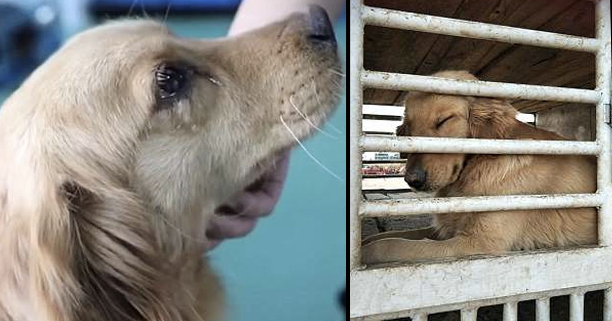 Dog Cries 'Tears Of Gratitude' After It's Saved From Chinese Meat Trade