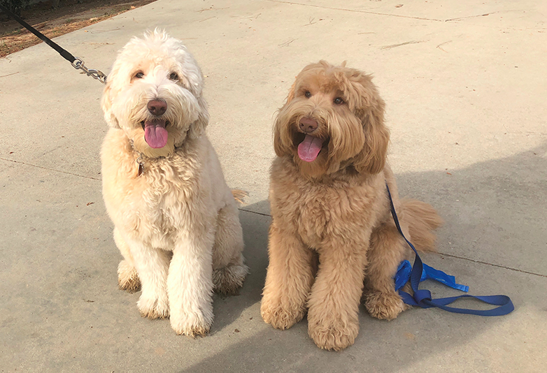 Dog Reunited With Brother He Hadnt Seen Since Birth After Spotting Him At Park Doggos web