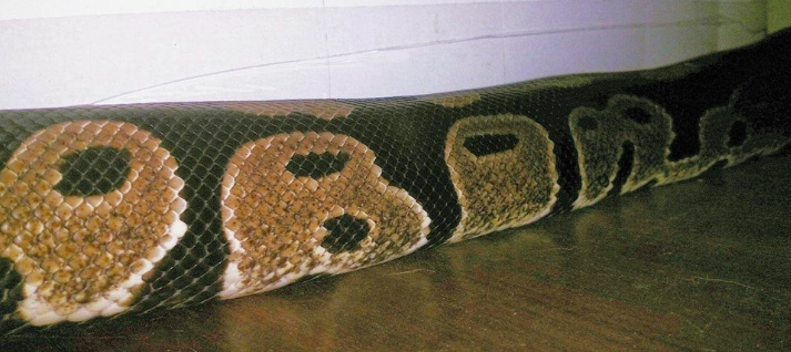Snake Has Obama Spelled Out In Its Scales OBAMA 1