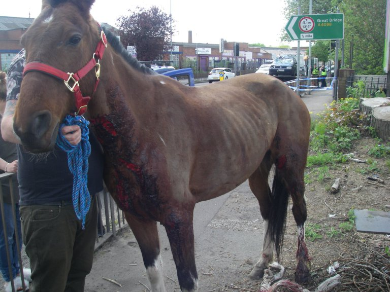 Help The RSPCA Find Cowards Who Left Horse For Dead In Street After Crash RSPCA Bilston 3
