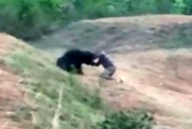 Guy Mauled To Death By Bear After Stopping To Take Selfie