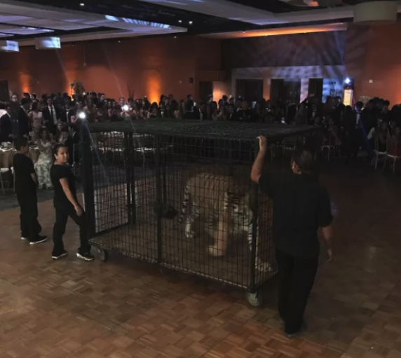 High School Prom Featured Caged Tiger As Entertainment Screen Shot 2018 05 14 at 21.57.56