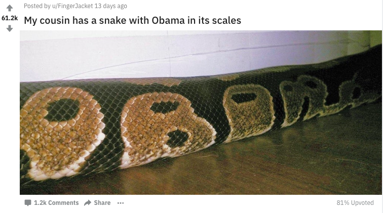 Snake Has Obama Spelled Out In Its Scales Screen Shot 2018 05 24 at 14.44.37