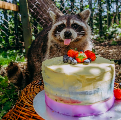 Woman Throws Raccoon Incredible Birthday Party
