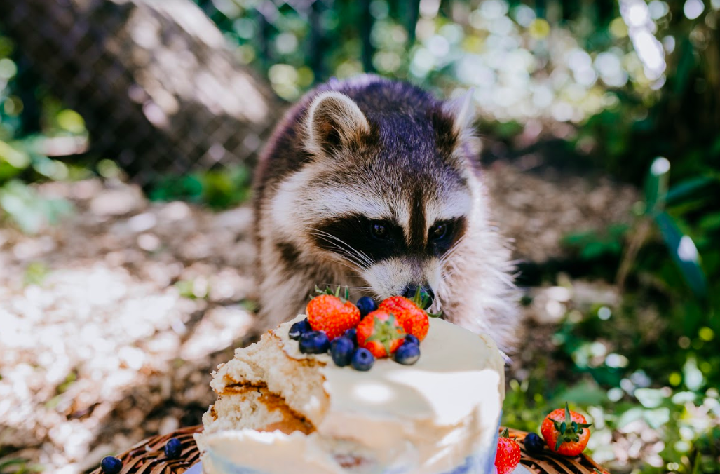 raccoon birthday party cake unilad xanthe rowland