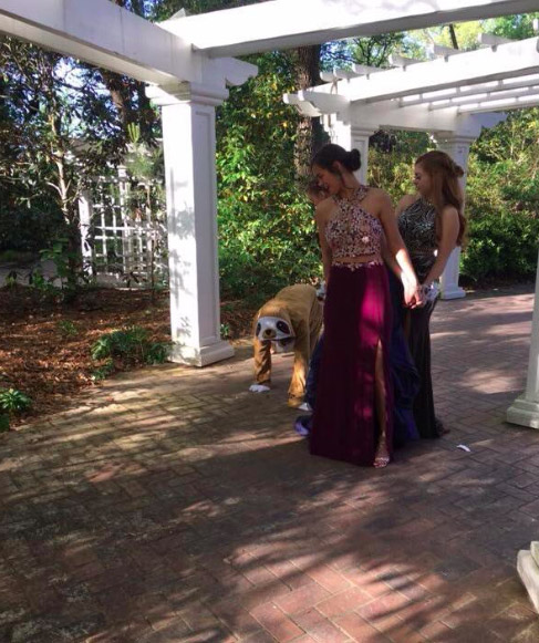 Girl Dresses As A Sloth And Photobombs Everyones Prom Photos Sloth2
