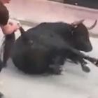 Bull Collapses In Street After Being Locked In Cage For Days Before Bull Run