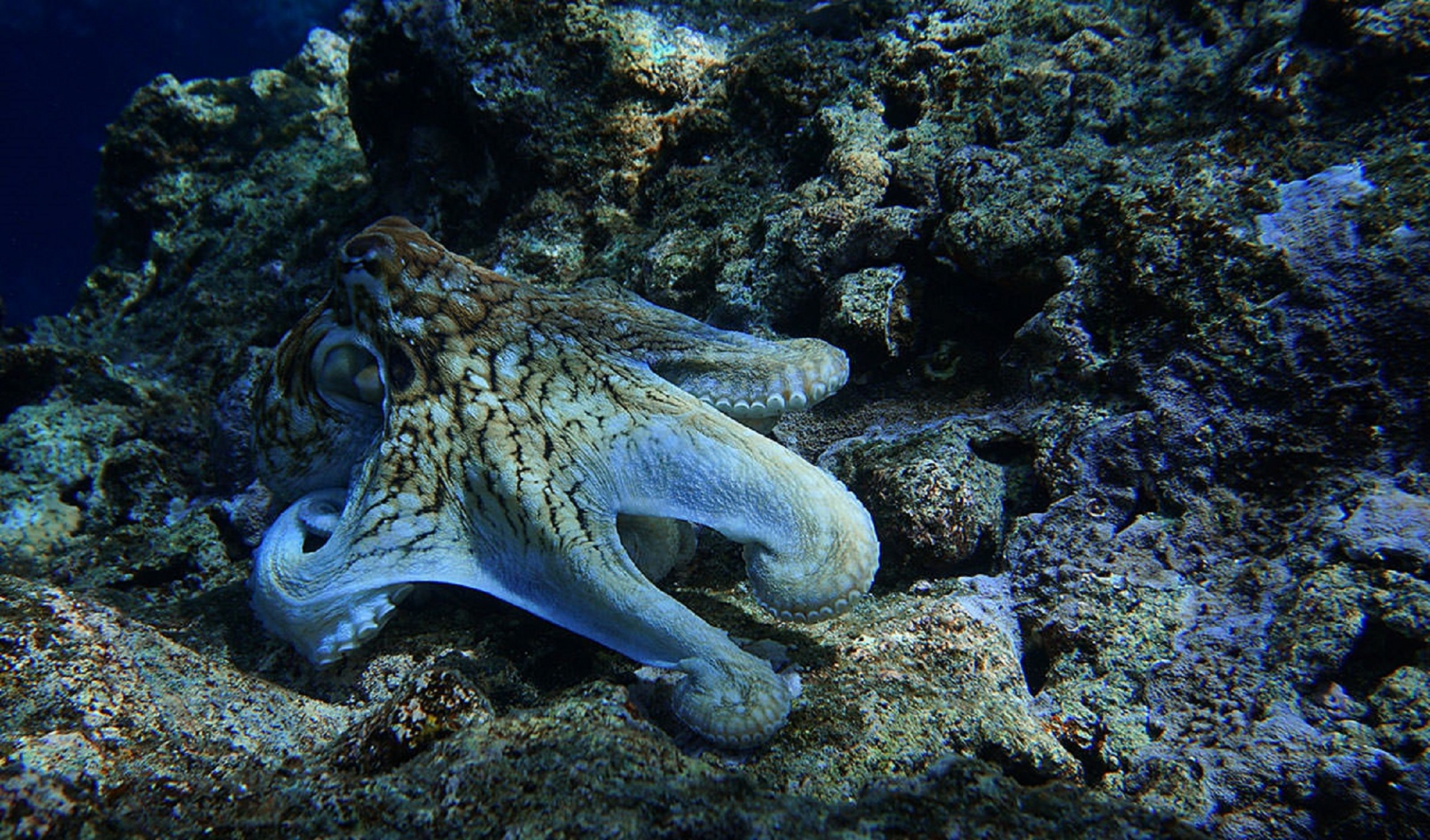Octopus on ocean floor